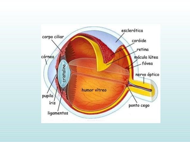 • Botões gustativos na cavidade oral formados por célulasBotões gustativos na cavidade oral formados por células sensoriai...
