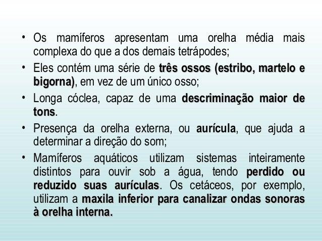 Sistema sensorial dos vertebrados  - UFPA