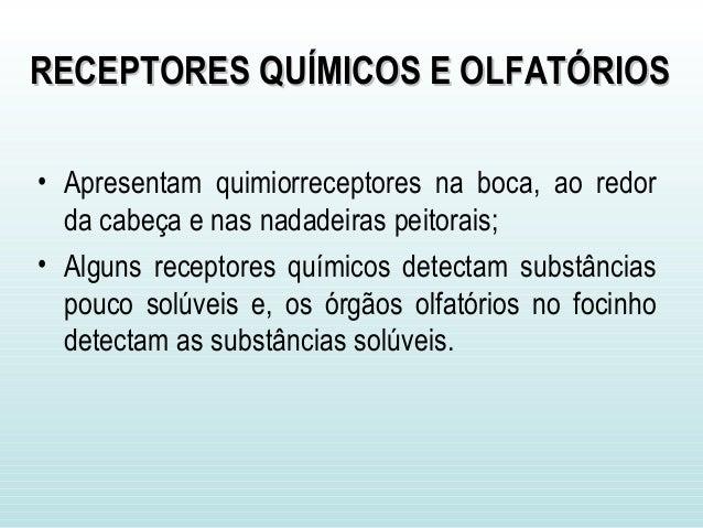 Sistema sensorial dos vertebrados  - UFPA Slide 3