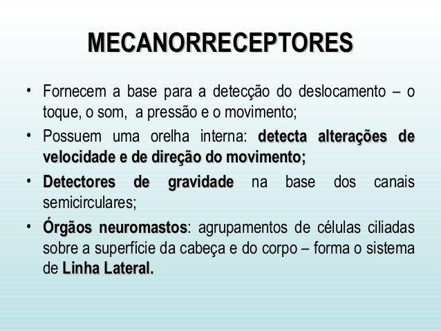 MECANORRECEPTORESMECANORRECEPTORES • Fornecem a base para a detecção do deslocamento – o toque, o som, a pressão e o movim...