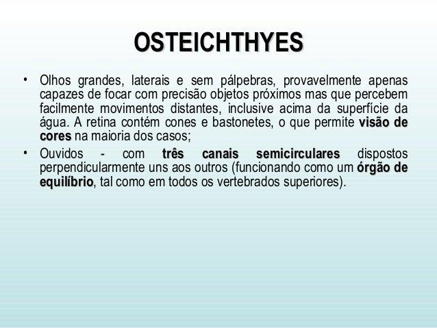 OSTEICHTHYESOSTEICHTHYES • Olhos grandes, laterais e sem pálpebras, provavelmente apenas capazes de focar com precisão obj...