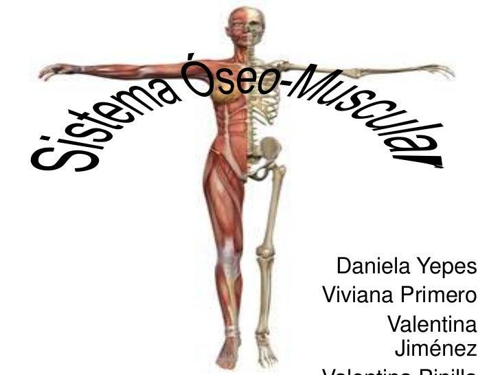 Sistema óseo muscular 2