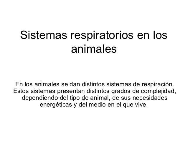 Sistemas respiratorios en los           animales En los animales se dan distintos sistemas de respiración.Estos sistemas p...