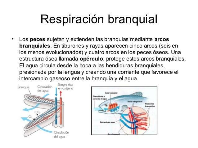 Sistemas respiratorios en los animales
