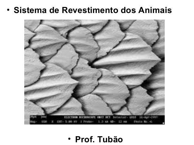 • Sistema de Revestimento dos Animais             • Prof. Tubão