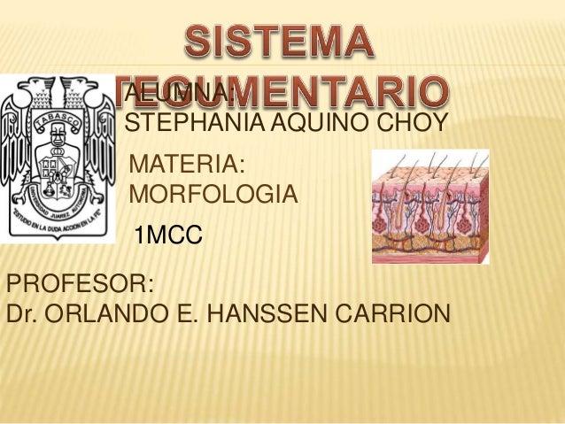 PROFESOR: Dr. ORLANDO E. HANSSEN CARRION ALUMNA: STEPHANIA AQUINO CHOY MATERIA: MORFOLOGIA 1MCC