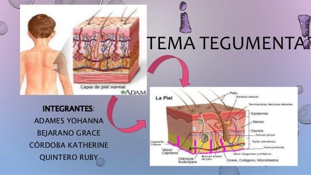 Embriologia Umana Langman Pdf