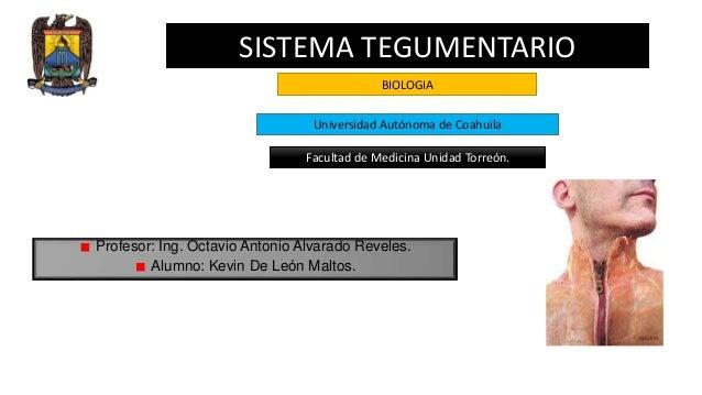 SISTEMA TEGUMENTARIO BIOLOGIA Universidad Autónoma de Coahuila Facultad de Medicina Unidad Torreón.  Profesor: Ing. Octavi...