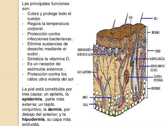 Sistema tegumentario y faneras