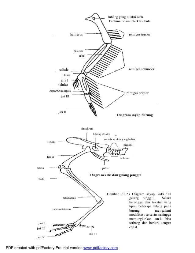 sistematika vertebrata