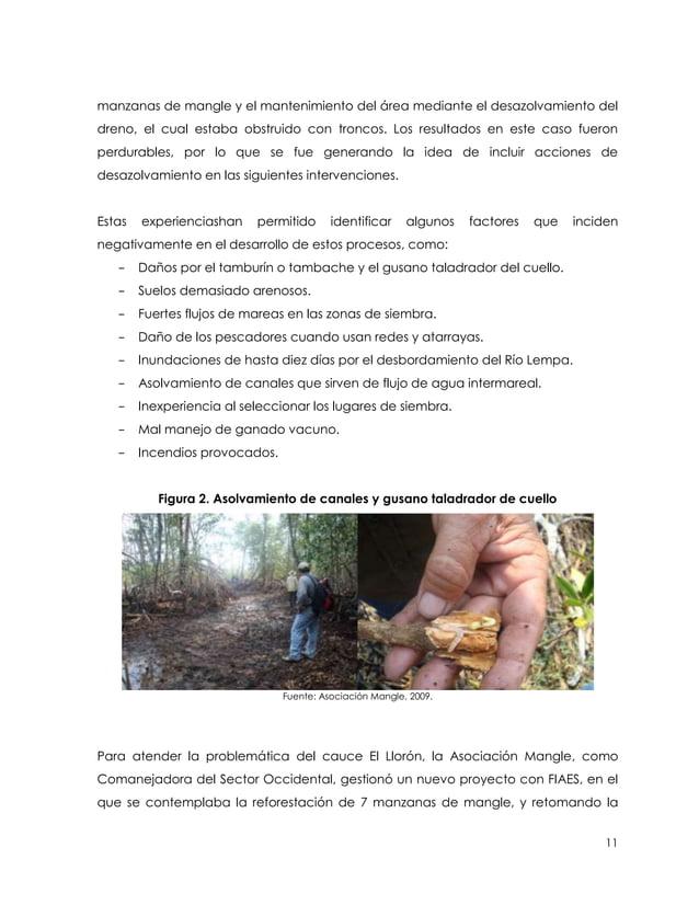 manzanas de mangle y el mantenimiento del área mediante el desazolvamiento deldreno, el cual estaba obstruido con troncos....