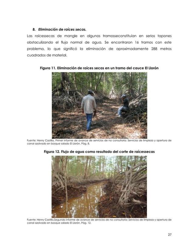 B. Eliminación de raíces secas.Las raícessecas de mangle en algunos tramosseconstituían en serios taponesobstaculizando el...