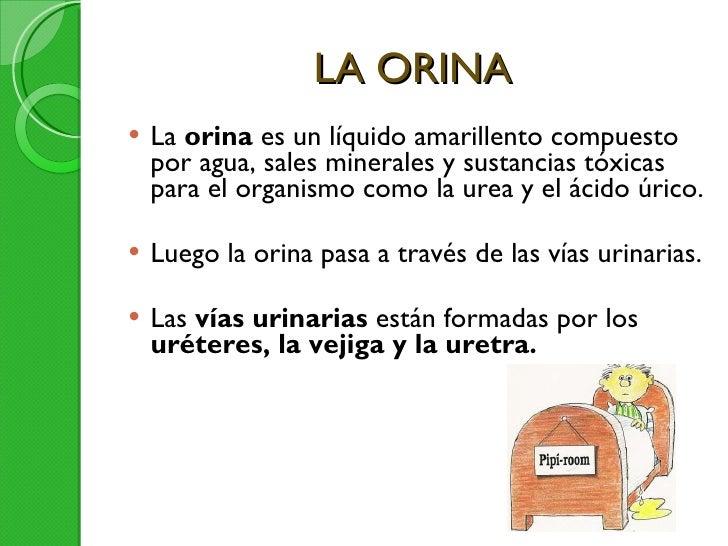 LA ORINA <ul><li>La  orina  es un líquido amarillento compuesto por agua, sales minerales y sustancias tóxicas para el org...