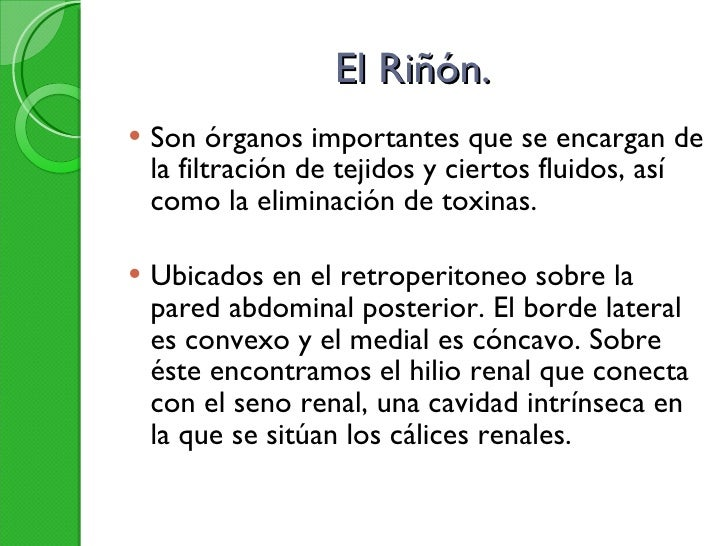 El Riñón. <ul><li>Son órganos importantes que se encargan de la filtración de tejidos y ciertos fluidos, así como la elimi...