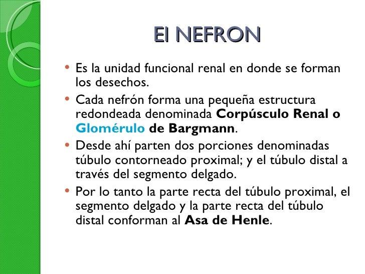 El NEFRON <ul><li>Es la unidad funcional renal en donde se forman los desechos.  </li></ul><ul><li>Cada nefrón forma una p...