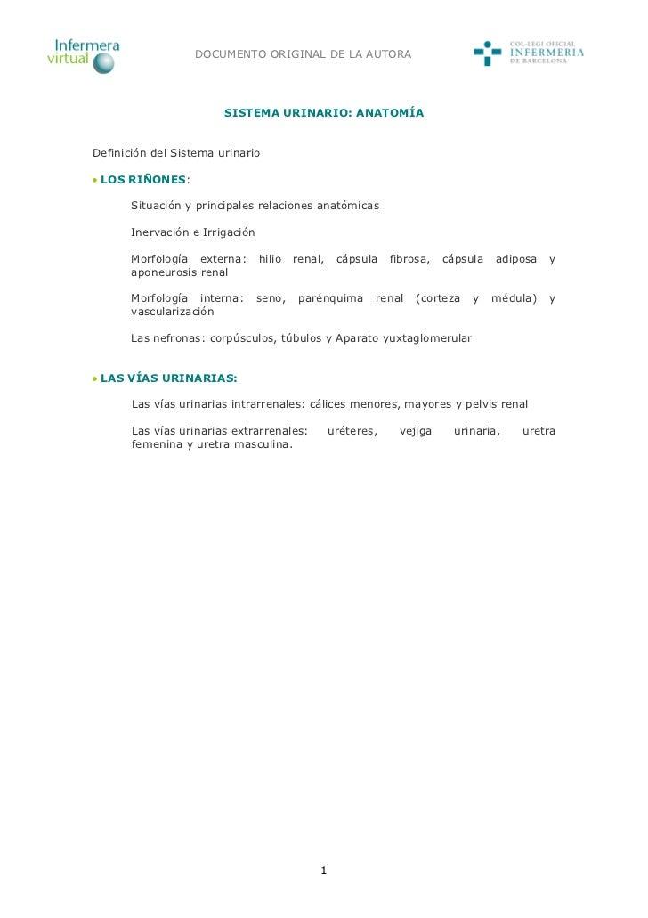 DOCUMENTO ORIGINAL DE LA AUTORA                        SISTEMA URINARIO: ANATOMÍADefinición del Sistema urinario LOS RIÑON...