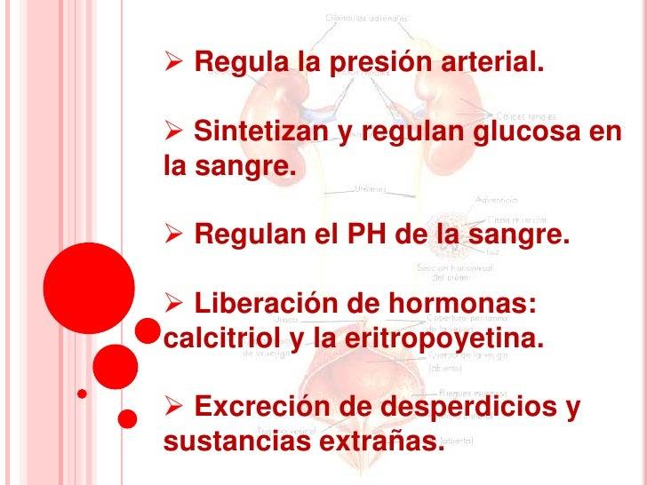  Regula la presión arterial. Sintetizan y regulan glucosa enla sangre. Regulan el PH de la sangre. Liberación de hormo...