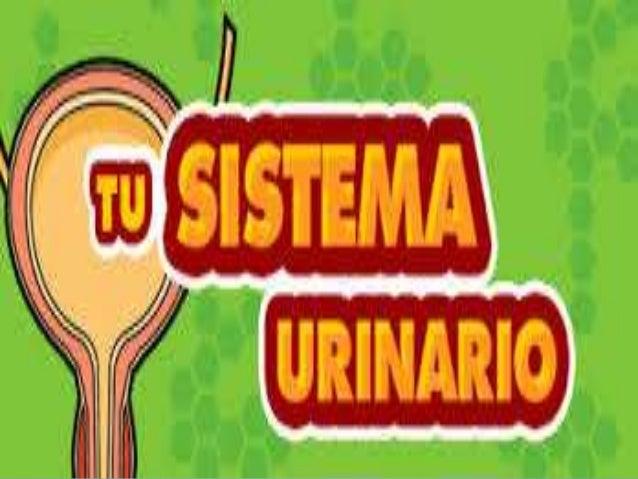 ¿Qué es el sistema urinario? Es el conjunto de órganos encargados de producir y excretar orina(líquido de desecho), produc...