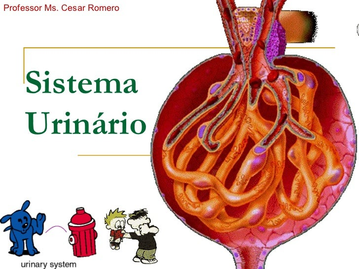 Professor Ms. Cesar Romero         Sistema     Urinário