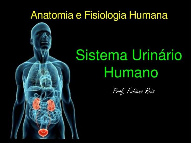 Anatomia e Fisiologia Humana<br />Sistema Urinário Humano<br />Prof. Fabiano Reis<br />