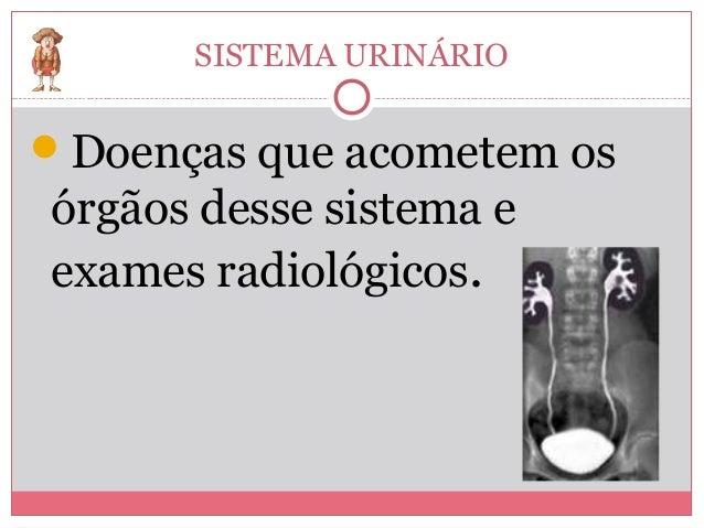 SISTEMA URINÁRIODoenças que acometem osórgãos desse sistema eexames radiológicos.