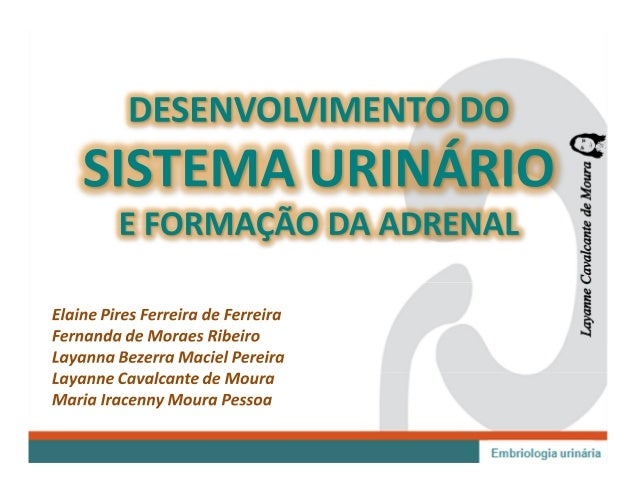 Embriologia do Sistema Urinário