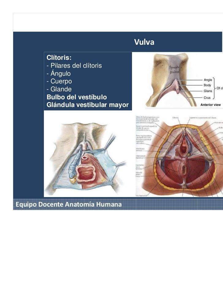 Excelente Anatomía De Un Clítoris Inspiración - Imágenes de Anatomía ...
