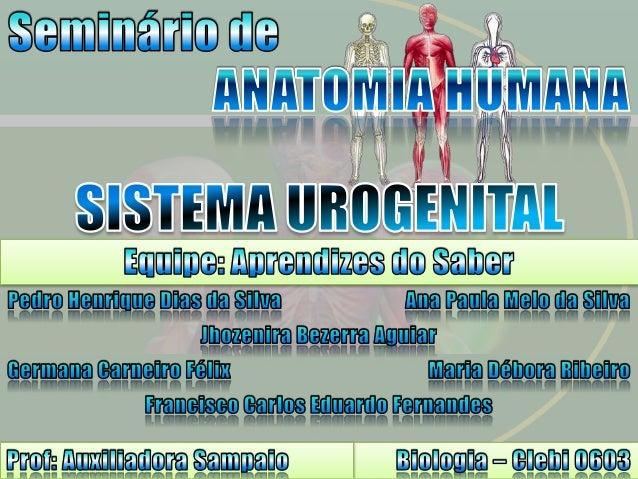 O sistema urinário e o sistema genital, sob o ponto de vista embriológico anatômico, está intimamente relacionado.