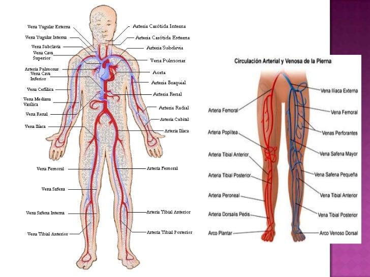 Sistema vascular semiologia parte 1