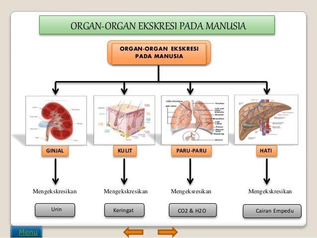 Image result for organ ekskresi