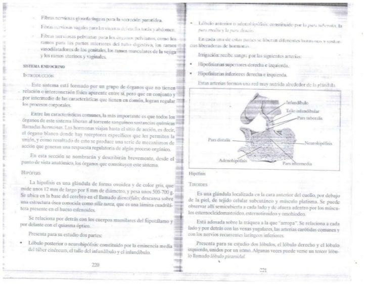 Sistem endocrino