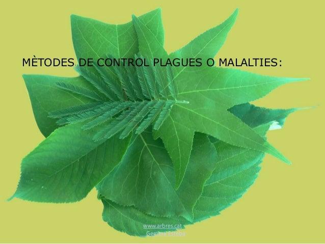 www.arbres.cat Gemma Esteba MÈTODES DE CONTROL PLAGUES O MALALTIES: