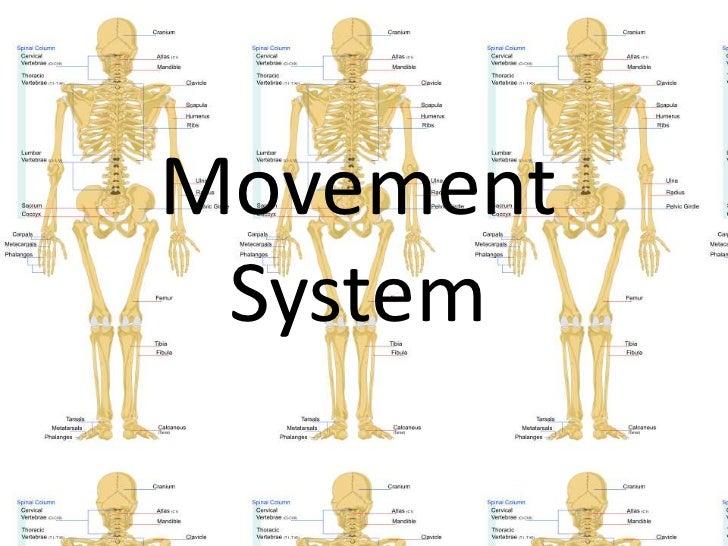 Movement System