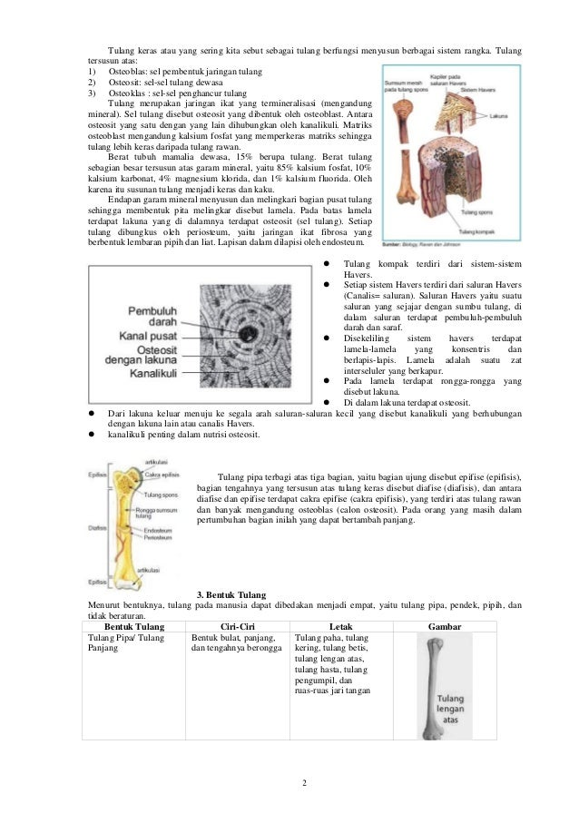 2 Tulang keras atau yang sering kita sebut sebagai tulang berfungsi menyusun berbagai sistem rangka. Tulang tersusun atas:...