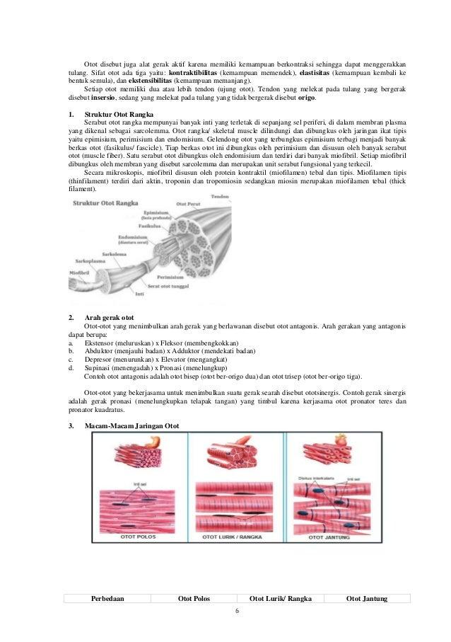 6 Otot disebut juga alat gerak aktif karena memiliki kemampuan berkontraksi sehingga dapat menggerakkan tulang. Sifat otot...