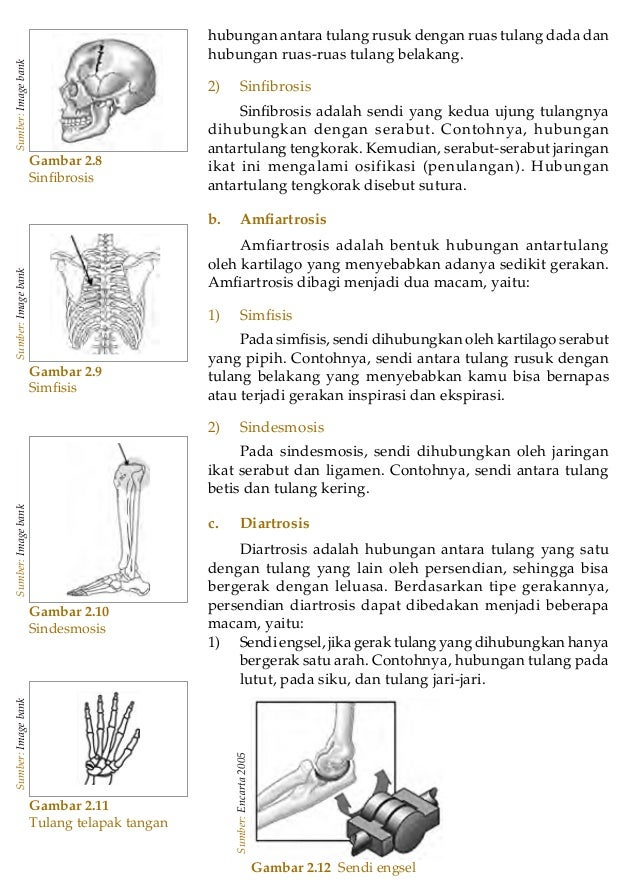 Bab 2 - Sistem Gerak pada Manusia 25Gambar 2.8SinfibrosisSumber:Imagebankhubungan antara tulang rusuk dengan ruas tulang da...