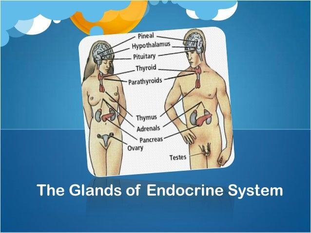 mekanisme kerja hormon steroid