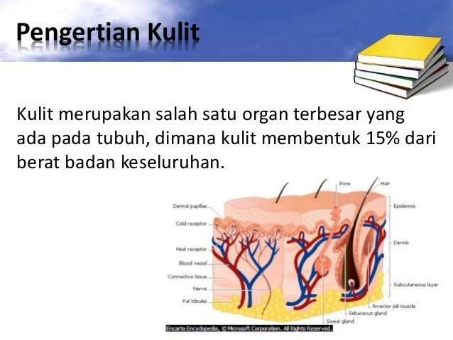 √Kulit: Pengertian, Fungsi Serta Bagian-Bagian Kulit