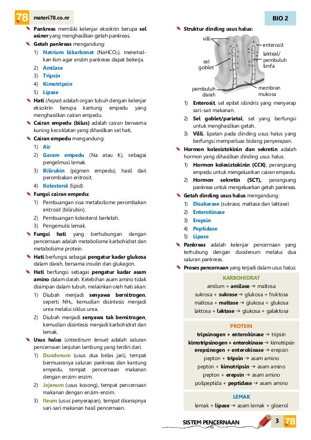 MATERI Sistem pencernaan KELAS XI SMA