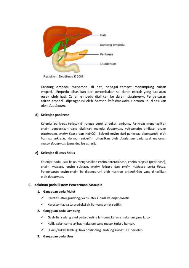 Sistem pencernaan pada manusia dan ruminansia