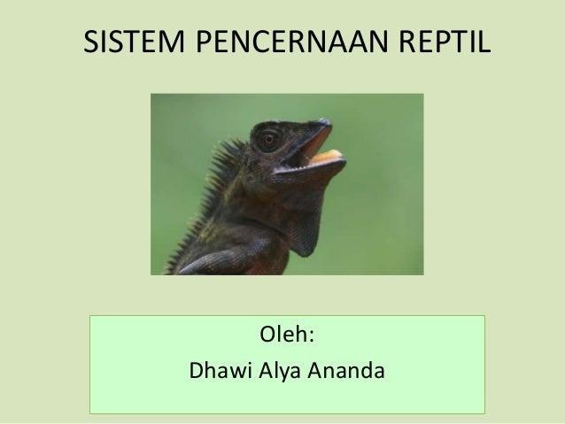 560 Koleksi Gambar Sistem Pencernaan Pada Hewan Reptil Gratis Terbaik
