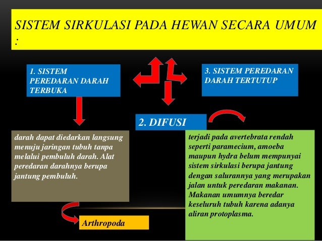 Sistem Peredaran Darah Vertebrata