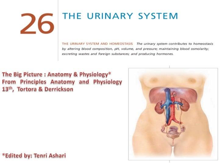 Sistem Perkemihan/Urinaria (Urinary System)