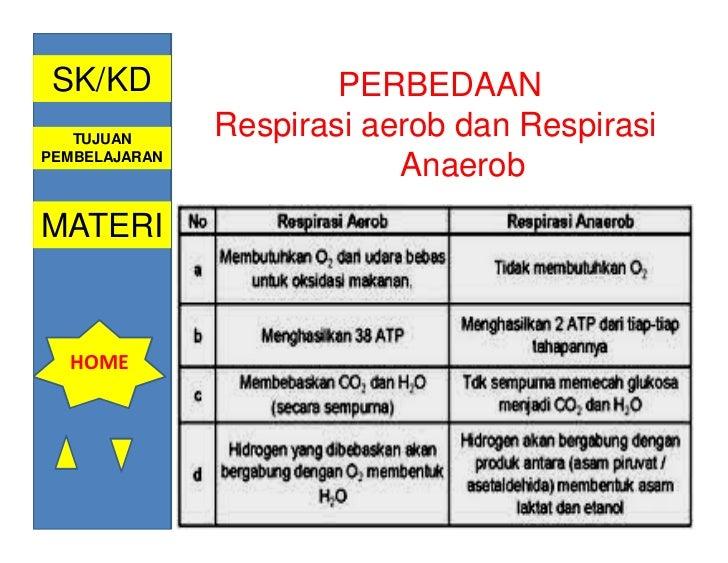 Sistem pernafasan oleh ismail