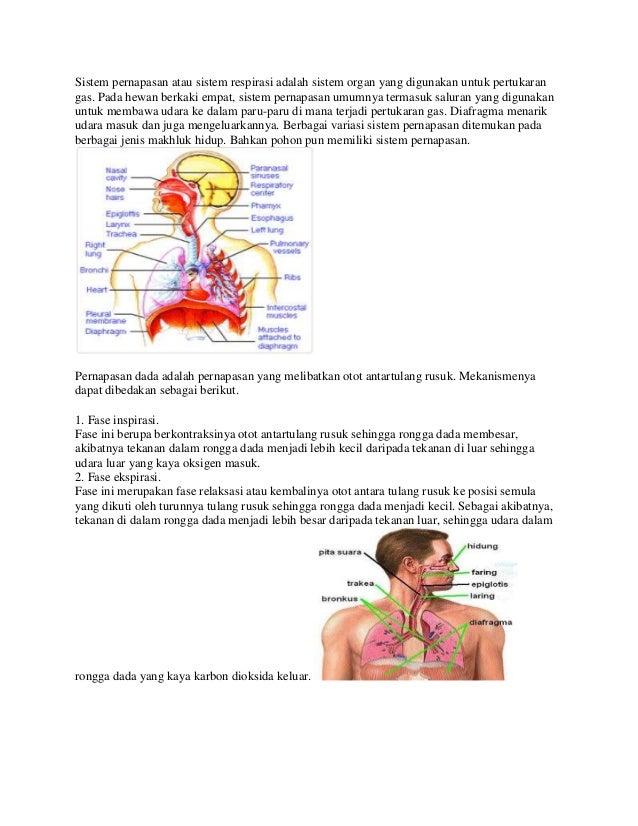 Sistem pernapasan atau sistem respirasi adalah sistem organ yang digunakan untuk pertukaran gas. Pada hewan berkaki empat,...
