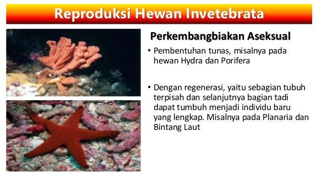 48 Gambar Hewan Hydra Dengan Cara Perkembangbiakan HD Terbaru
