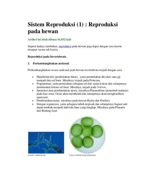 Sistem Reproduksi (1) : Reproduksi pada hewan Artikel ini telah dibaca 61,052 kali Seperti halnya tumbuhan, reproduksi pad...