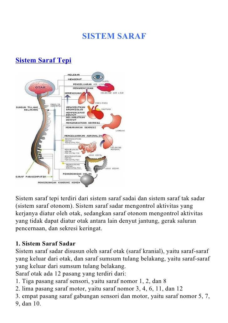 SISTEM SARAFSistem Saraf TepiSistem saraf tepi terdiri dari sistem saraf sadai dan sistem saraf tak sadar(sistem saraf oto...