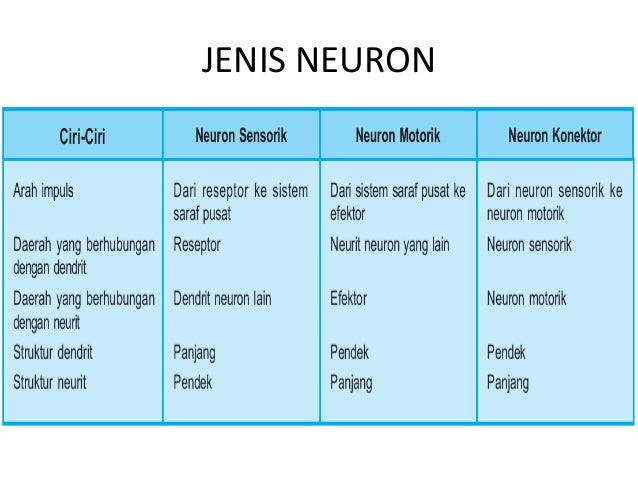 Sistem saraf jenis neuron 4 ccuart Image collections