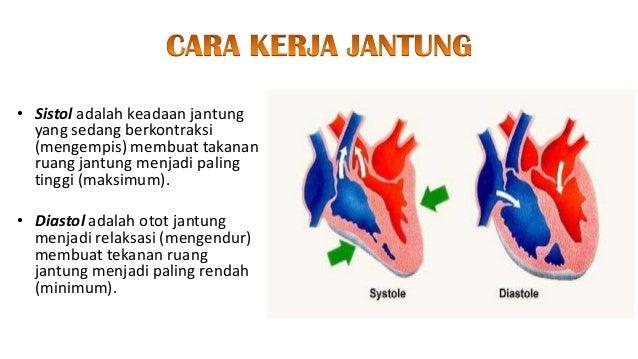 Sistem sirkulasi darah